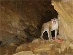 Imagen 4 de la galería de Visita Guiada: La Cueva de Arrikrutz