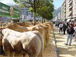 Feria del Sábado de Ramos en Bergara