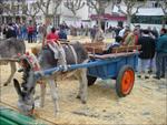 Feria del Burro
